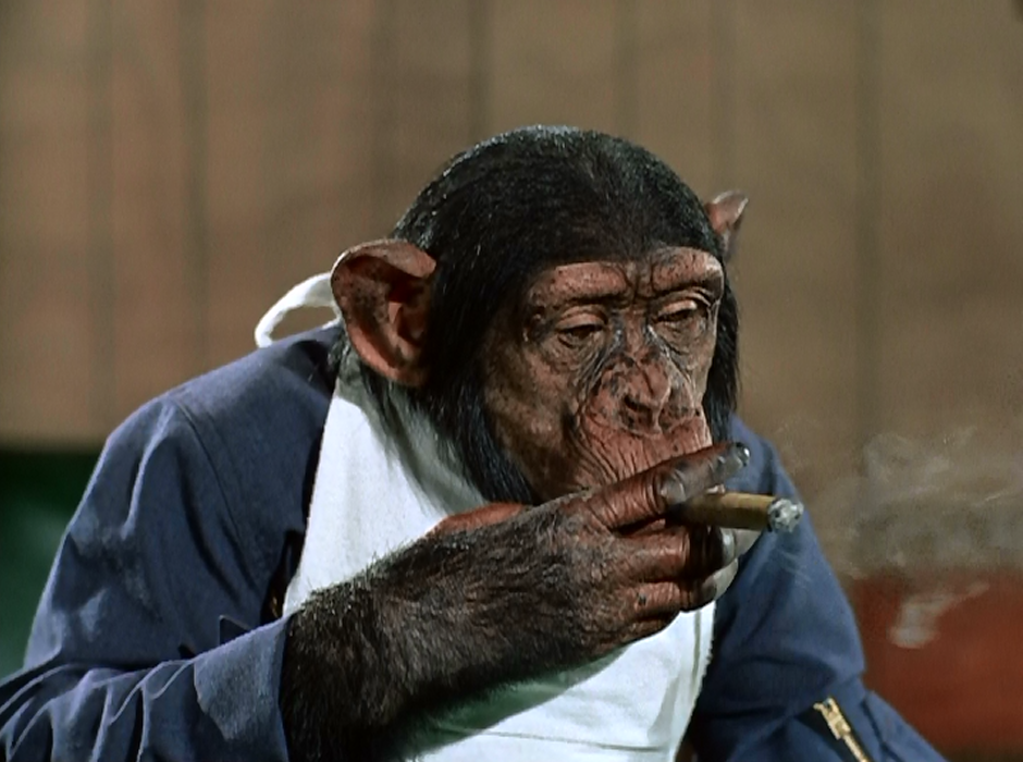 MoonPilotChimpSmoking